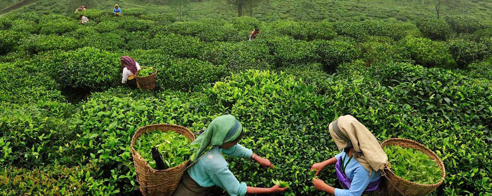 DARJEELING - THE REMARKABLE TOUR